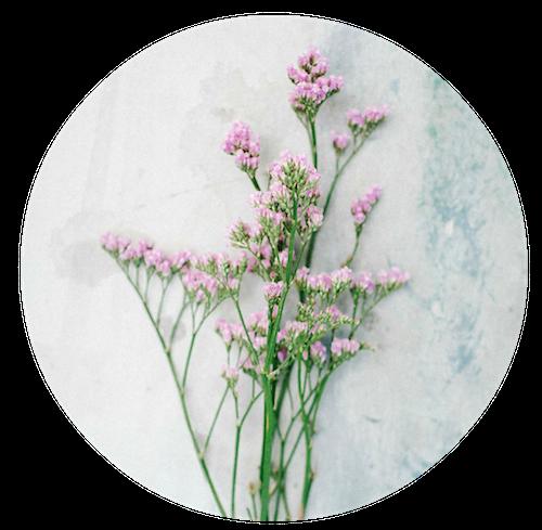 מדריך פרחים לחתונת קיץ: חלק א