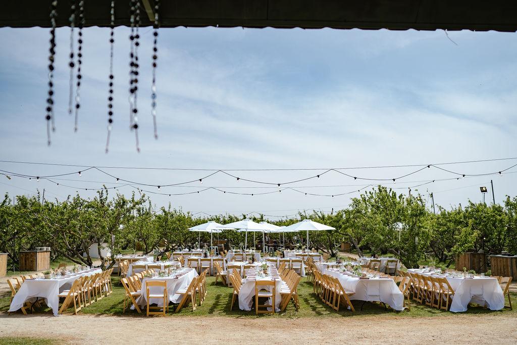 חופה בין הכרמים ומסיבה בין העצים: חתונת טבע אביבית