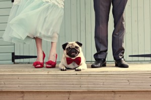 Ten of the Cutest Wedding Dogs Ever